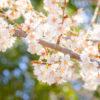 春♡なのに、ときめきを感じられないあなたへ